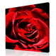 photo to canvas� - Rose