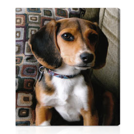 Photo to canvas gifts for pets 10x16 inches, on stretched canvas